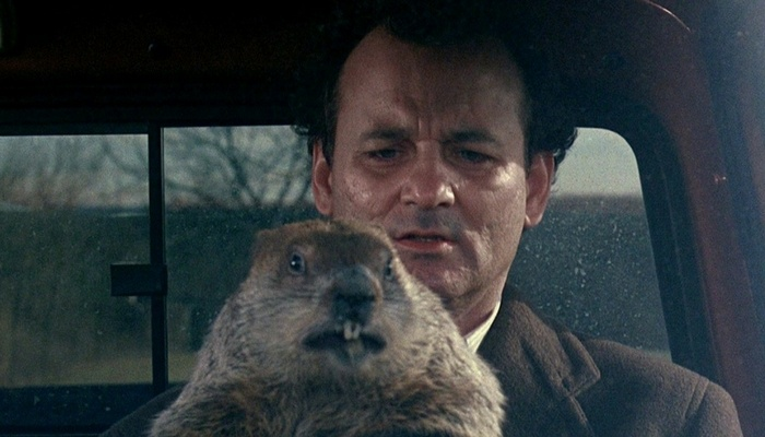 Groundhog tips for the work environment